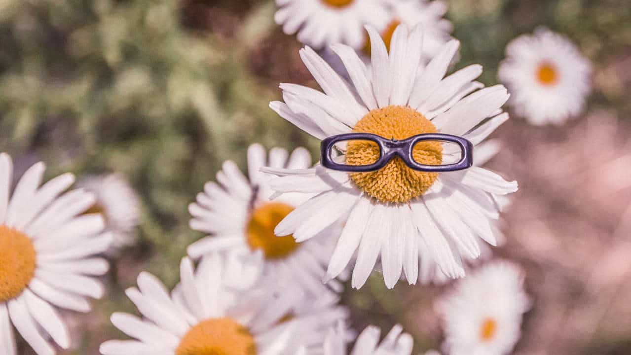 flower with glasses